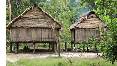 amazon_tree_houses.png